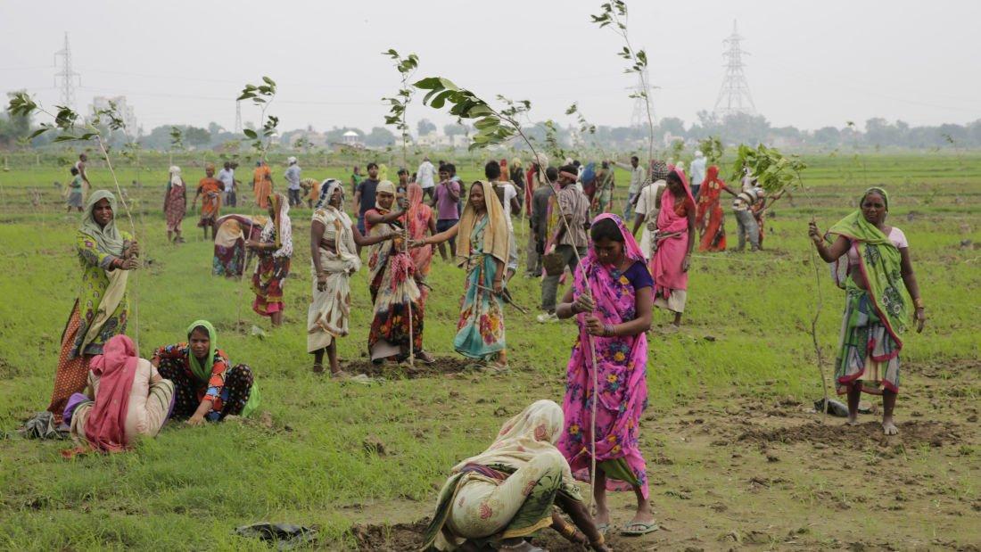 50 de milioane de copaci plantați într-o singură zi