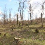 Video cu drona: O pădure dispărută la Borogani, Leova