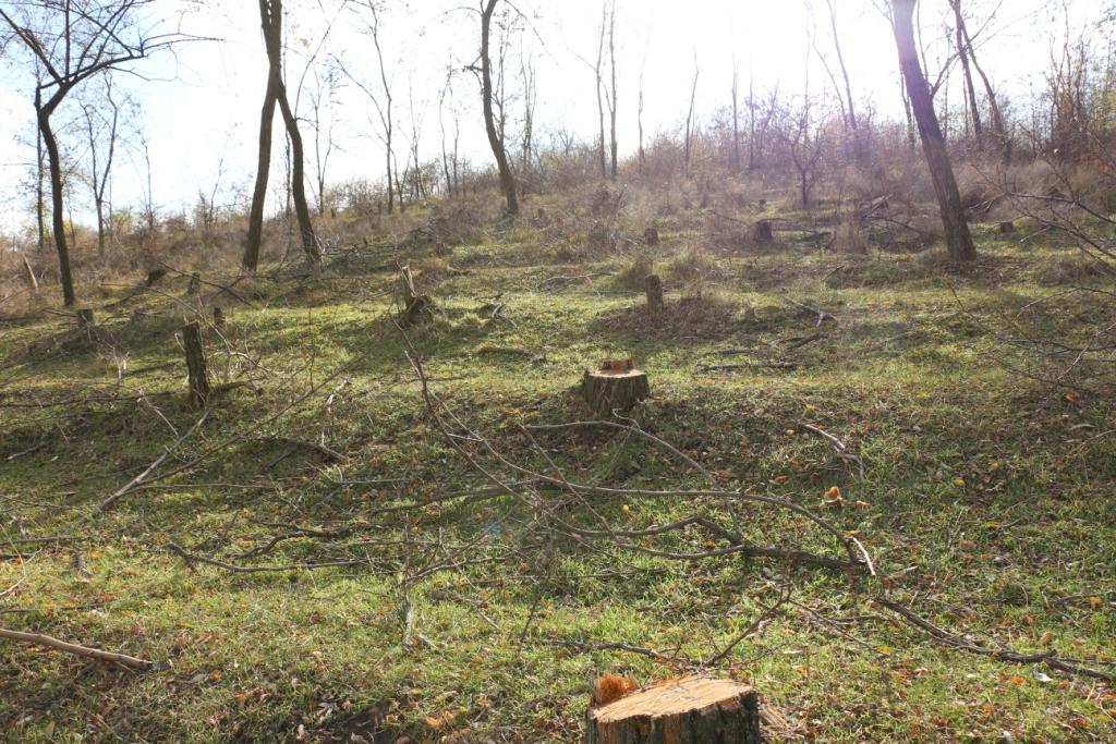 Galerie foto: Pădurea dispărută de la Borogani, Leova
