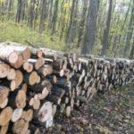 Peste 157 mii metri cubi de lemn va fi extras legal din pădurile statului