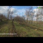 Noi tăieri masive în pădurea de la Borogani