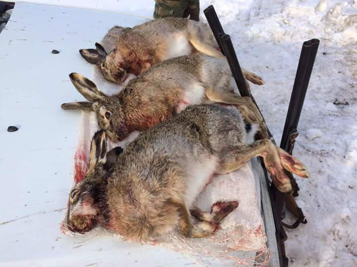 Vânători-braconieri prinși din nou