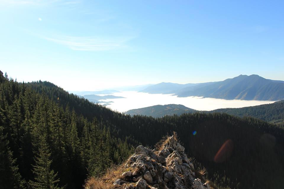 România deţine cea mai mare suprafaţă  de păduri seculare din Europa
