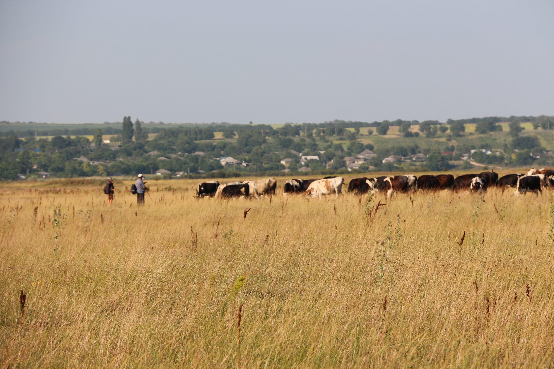 FAO: Vom promova practici agricole durabile și tehnologii prietenoase mediului