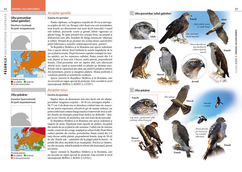 Păsările. Enciclopedie Ilustrată, pagini de interior, autor Tudor Cozari