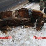 Pedepse penale pentru cruzimea față de animale