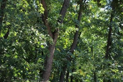 """Agenția """"Moldsilva"""": Perdele forestiere reabilitate și emisii de carbon reduse"""