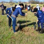 Peste zece mii de puieți au fost plantați la Palanca, Ștefan Vodă