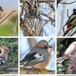 Testează-ți cunoștințele și găsește păsările în imagini!