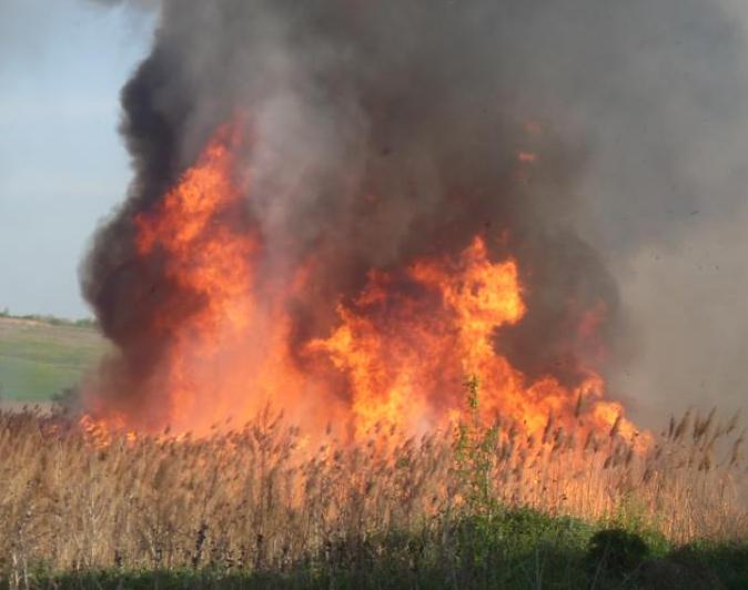 Nepăsare sau amenzi prea mici? Incendiile de vegetație  aduc pierderi greu de estimat