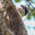 SPPN invită la Ziua Internațională a Păsărilor în Parcul Valea Morilor
