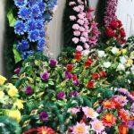 Fără flori artificiale în cimitire. Vezi ce trebuie să facă primăriile și administratorii de cimitire