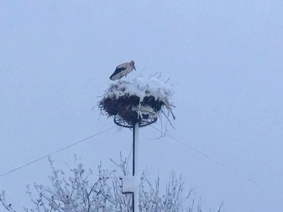 Ninsoarea abundentă din aprilie a afectat și păsările