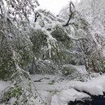 Potop de zăpadă în miez de primăvară