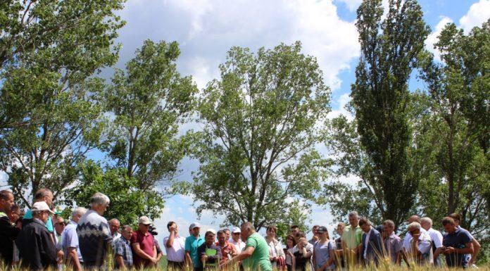 Proiectul MAC-P, Ziua Câmpului, 15 iunie 2017. Câmp de grâu în gospodăria lui Nicolai Kiktenko de la Rediul de Sus, Fălești