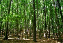 Pădurea ne ajuă să reducem nivelul de CO2. Foto: Natura.md