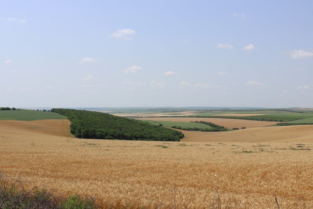 Peisaj agricol în sudul R. Moldova. Foto: Elena Scobioală