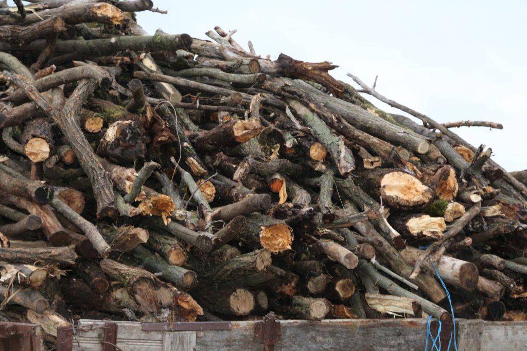 Biomasa nu înseamnă tăierea pădurilor, dar folosirea resturilor agricole, spune Iryna Stavchuk, Ucraina