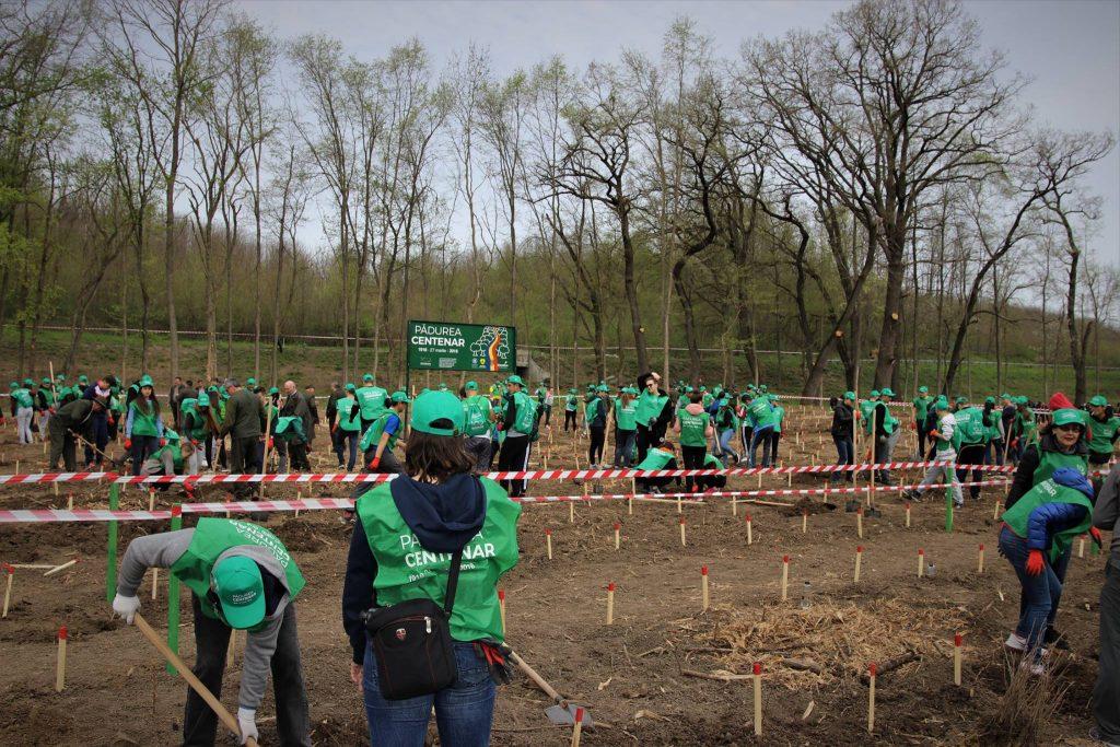 Plantarea Pădurii Centenar. Sursă foto: FB/RnpRomsilva