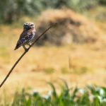 """Păsările de la """"Orheiul Vechi"""" (2)"""