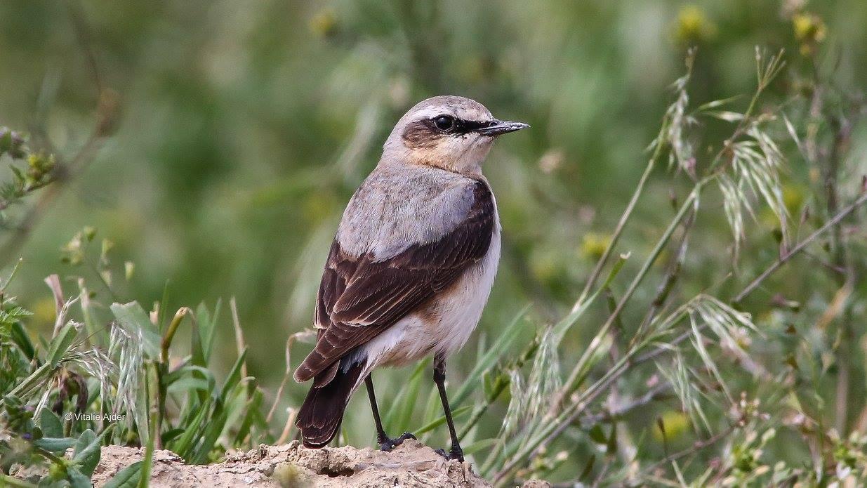 Strategia conservării biodiversității: să trăim în armonie cu natura