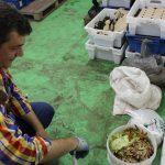 Aproape o tonă de deșeuri de bucătărie au fost transformate în biohumus, cu implicarea persoanelor vulnerabile
