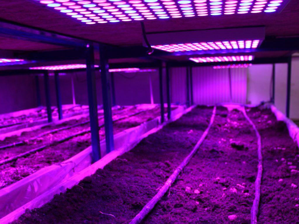 Sală amenajată pentru cultivarea verdețurilor pe bază de biohumus. Foto: AJMTEM