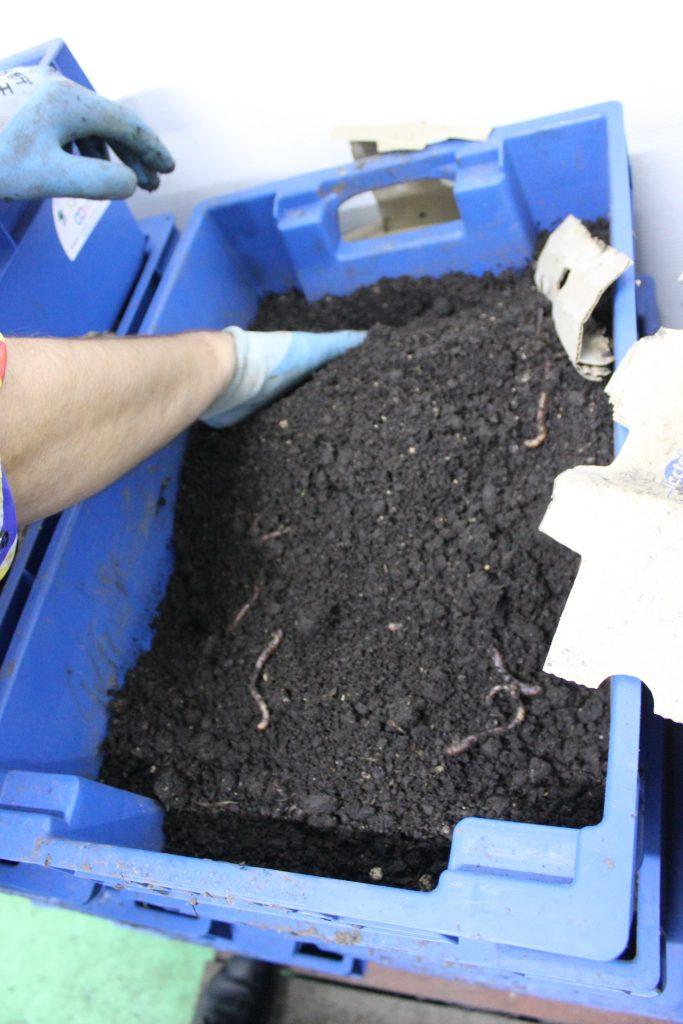 În lăzi speciale are loc procesul de fabricare naturală a biohumusului. Foto: AJMTEM