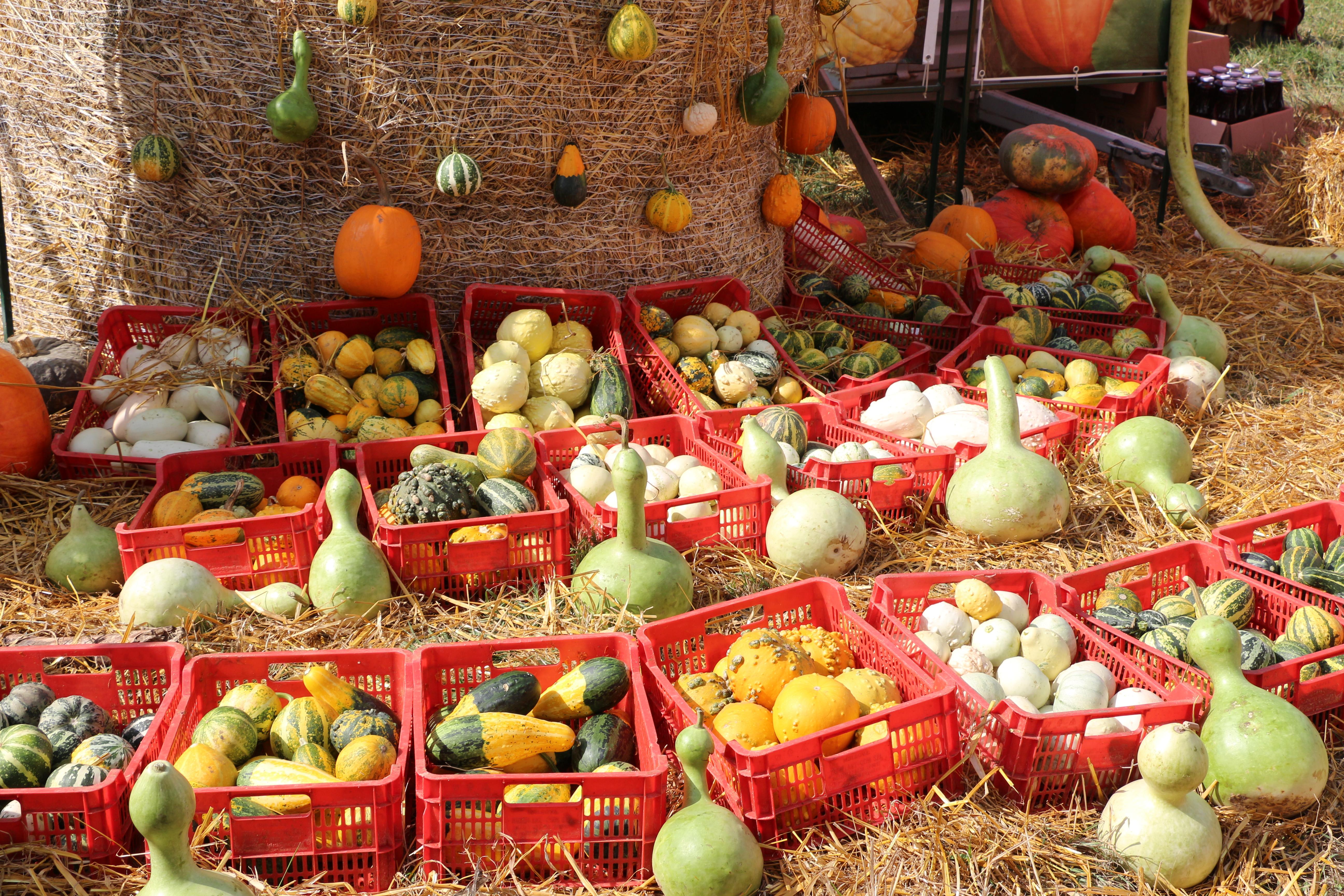 Trei iarmaroace în Chișinău cu fructe și legume direct de la producători