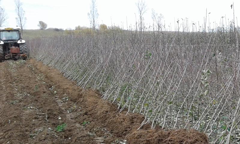 La plantare cu toții: în pepeniere așteaptă 16 milioane de puieţi