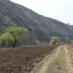 De ce să plantăm perdele forestiere de protecție a apelor