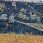 Focul a mistuit o suprafață din Rezervația Orheiul-Vechi