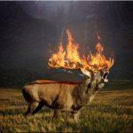Eco-StopFals: Animale în flăcări din Siberia, imagini false cu mii de distribuiri