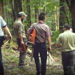 Furtul de pădure, jaf constant pe teritoriul României