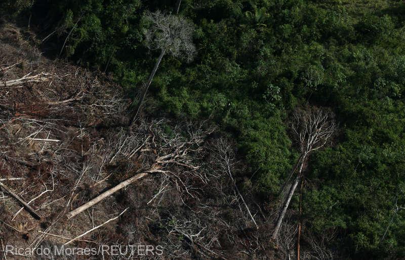 Defrişările din pădurea amazoniană din Brazilia au depăşit pragul de 10.000 de kilometri pătraţi într-un an