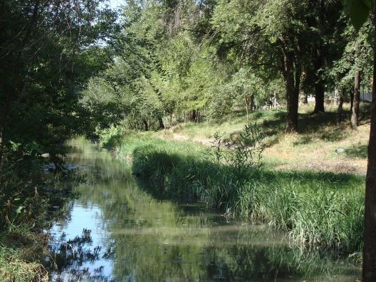 Apa râului Bâc, foarte poluată în regiunea orașului Sângera