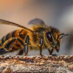 Campanie europeană de strângere a unui milion de semnături, pentru protejarea albinelor
