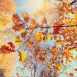 Noiembrie 2019, a doua cea mai caldă lună noiembrie înregistrată în ultimii 140 de ani