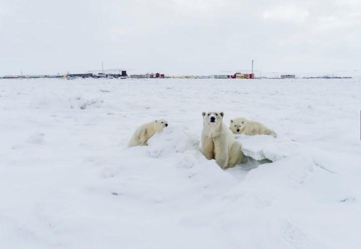 Foto: Максим Деминов/ WWF России