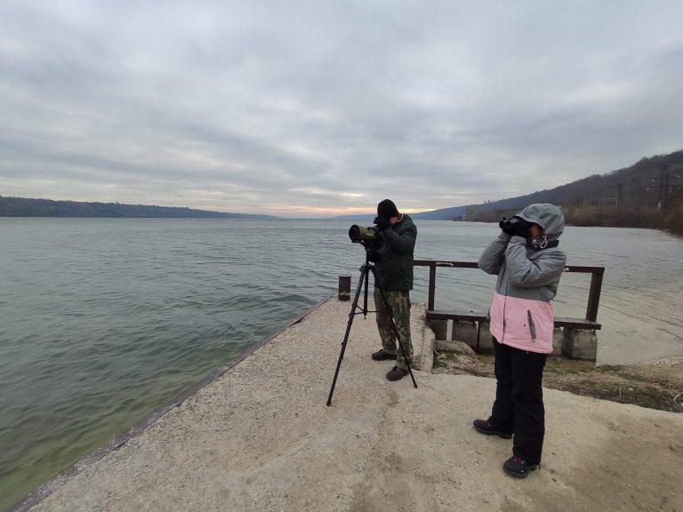 FOTO. DOC/ Midwinter 2020: Ce păsări de apă au observat ornitologii din Moldova