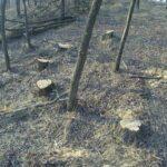 FOTO/ Dondușeni: Inspectorii de mediu au depistat zeci de arbori, tăiați ilicit