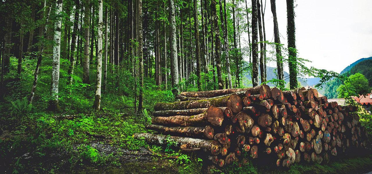 DOC/ Ce spune Moldsilva despre stoparea lucrărilor silvo-tehnice în păduri