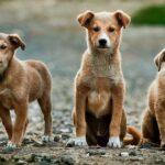 Pe o stradă din Capitală vor fi amenajate voliere pentru animalele fără stăpân