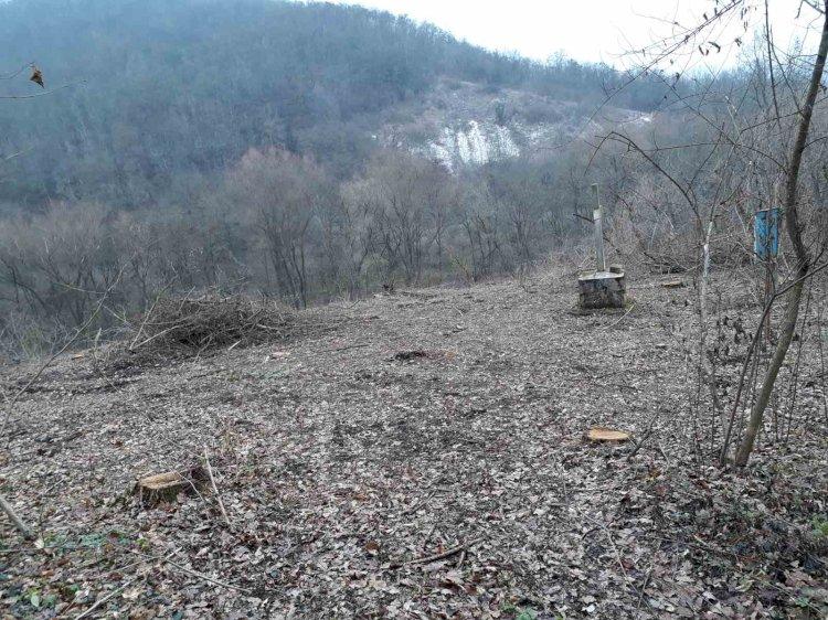 """Tăiere de copaci în Rezervaţia peisagistică """"Rudi-Arioneşti"""". Foto: natura.md"""