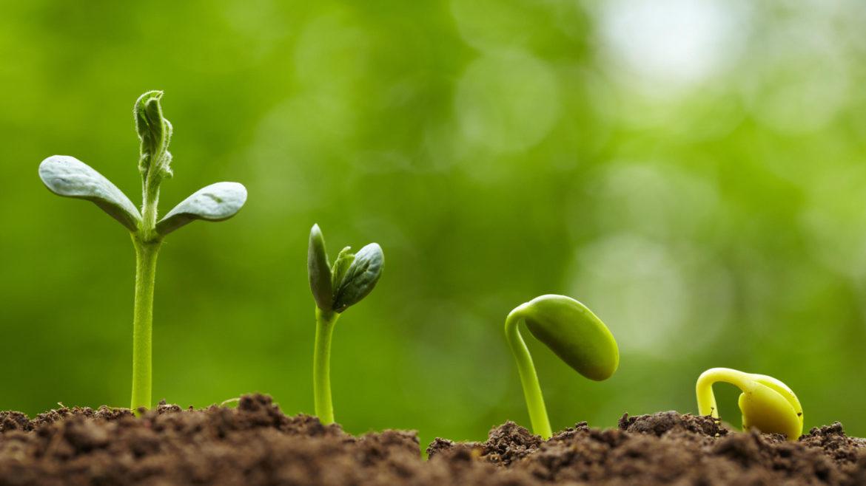 ONU a declarat 2020 anul internațional al sănătății plantelor