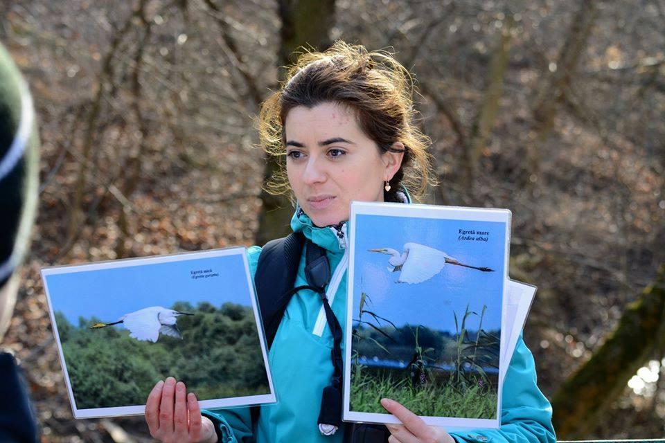 Silvia Ursul explicând diferențele dintre egreta mare (Casmerodius albus) și egreta mică (Egretta garzetta). Foto: FB/SPPN/Vasiliy Tovtul