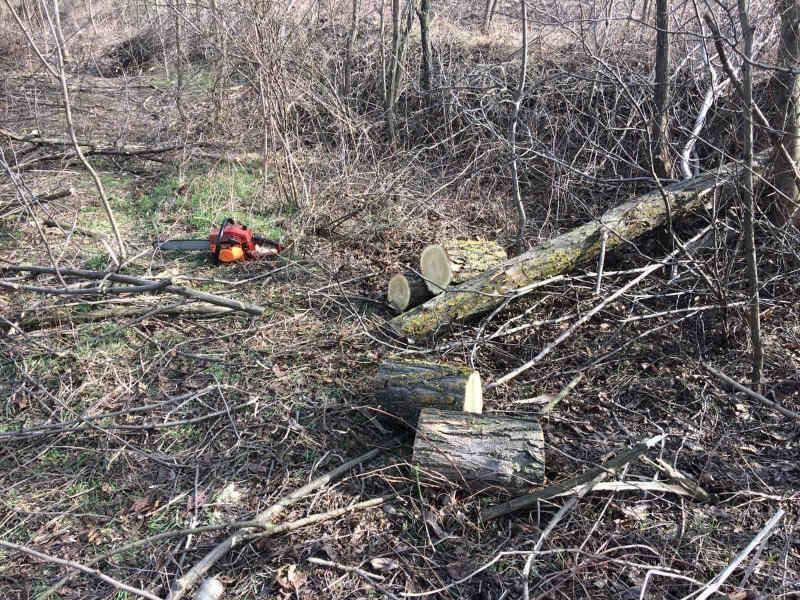 FOTO/ Peste 30 de arbori, tăiați ilegal la Nisporeni