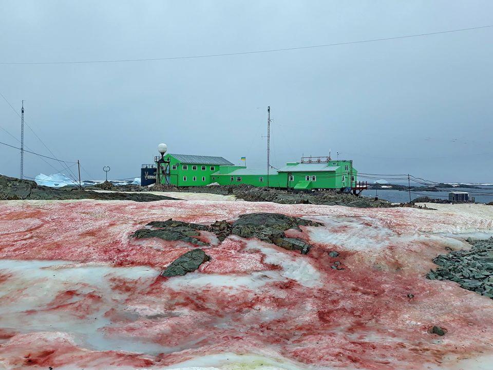 FOTO/ Zăpadă roșie în Antarctica. Cum se explică fenomenul
