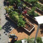 Devino voluntar Primăria mea și participă la crearea unei grădini comunitare în Chișinău