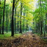 """FOTO/ Un cerb cu pete, găsit împușcat în Rezervația Naturală """"Codrii"""""""